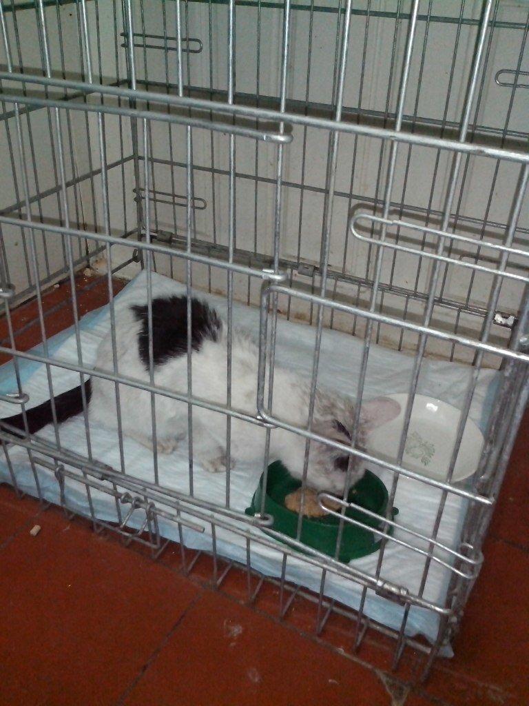 В Ульяновске кошка провела в вентиляционной шахте 22 дня без еды и света (фото) - фото 1