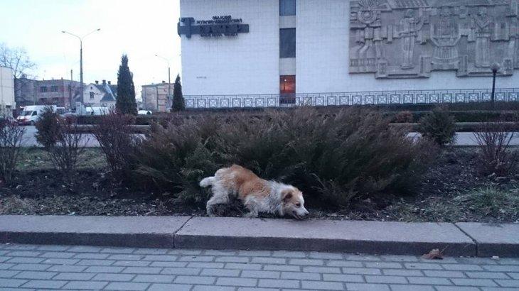 Франківські копи врятували пораненого собаку (ФОТО), фото-1