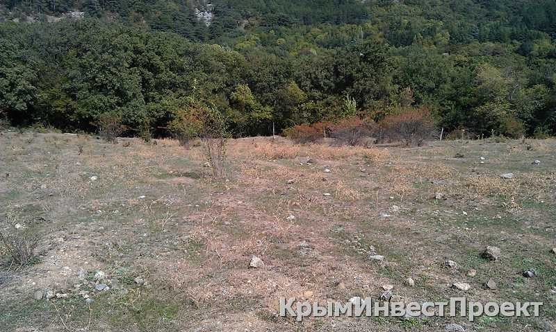 Британская компания из офшора получила участок земли на ЮБК в районе «Поляны сказок», фото-1