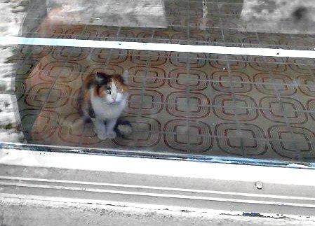 ЖКХ Полоцка грозятся отравить кошку, которую пытаются вызволить из плена жители города (фото) - фото 2