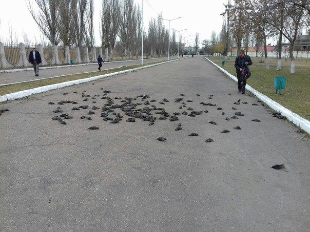 Падающие с неба метрвые птицы: В Одесской области зафиксировали необычное явление (ФОТО, ВИДЕО) (фото) - фото 1