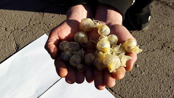 Криворожские наркоторговцы задержаны с презервативами, наполненными опием (ФОТО) (фото) - фото 1