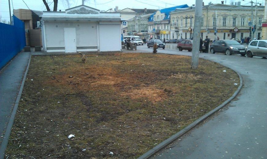 Без зелени: на площади Карла Маркса в Ростове срубили почти все деревья (фото) - фото 1