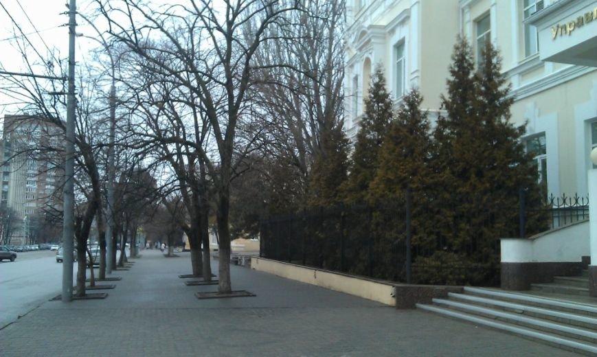 Без зелени: на площади Карла Маркса в Ростове срубили почти все деревья (фото) - фото 3