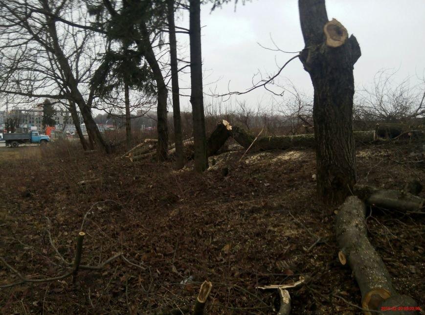 В Тернополі на Протасевича невідомі вирубали 15 дерев (фото), фото-2