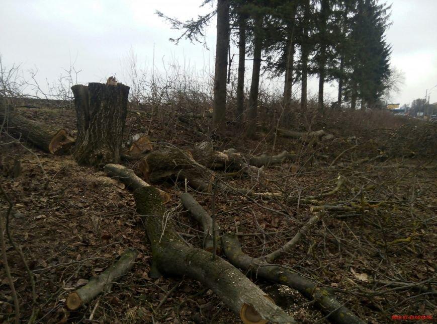 В Тернополі на Протасевича невідомі вирубали 15 дерев (фото), фото-1