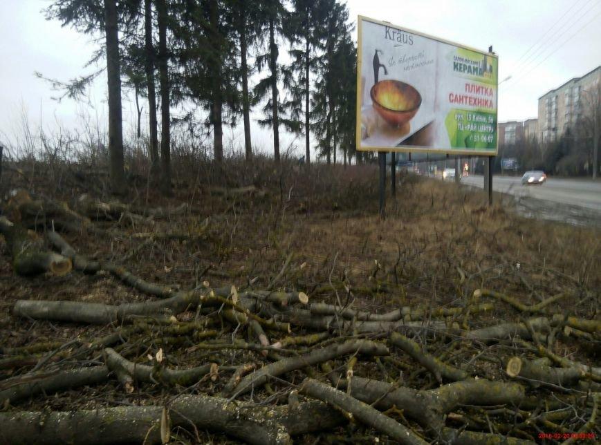 В Тернополі на Протасевича невідомі вирубали 15 дерев (фото), фото-3
