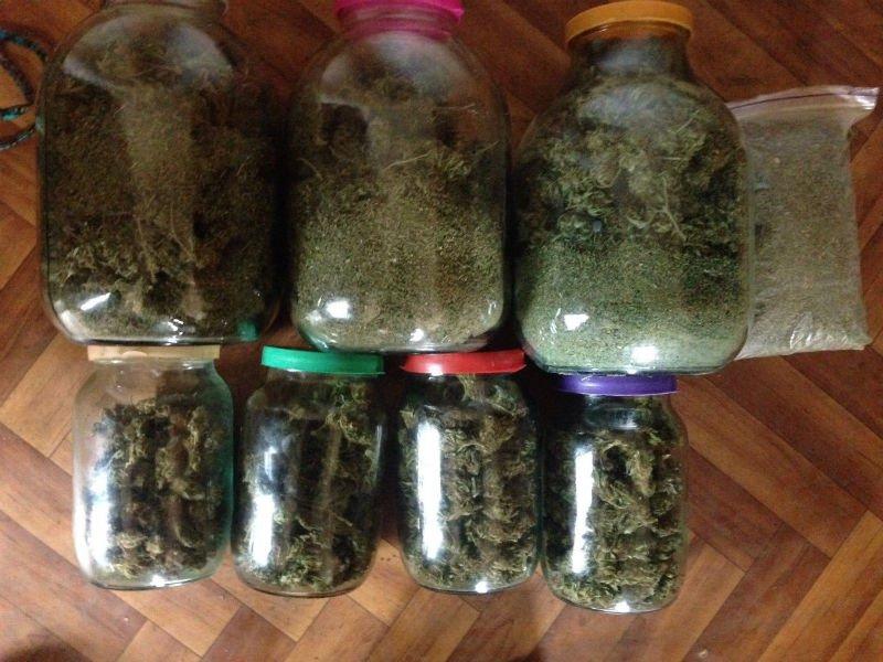 Житель Славянского района выращивал коноплю по 15 евро за семечку (фото) - фото 1