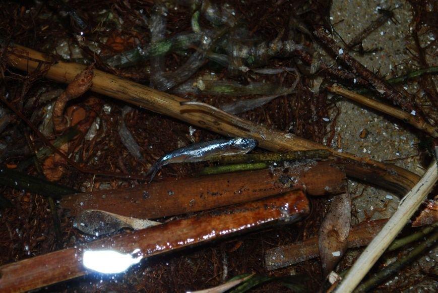 В Запорожье зафиксировали массовый мор рыбы, - ФОТО (фото) - фото 1