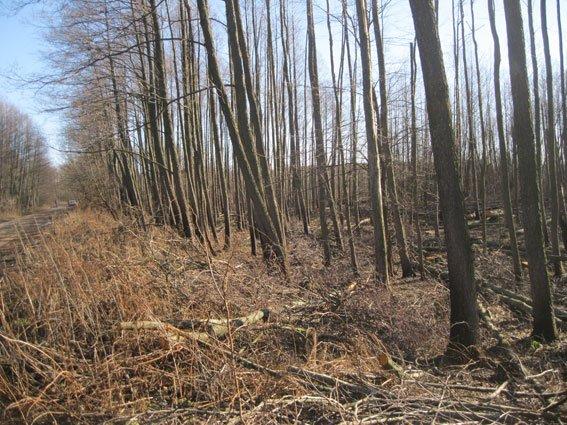 На Черниговщине незаконных лесорубов поймали на горячем (фото) - фото 1