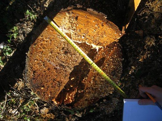 На Черниговщине незаконных лесорубов поймали на горячем (фото) - фото 3