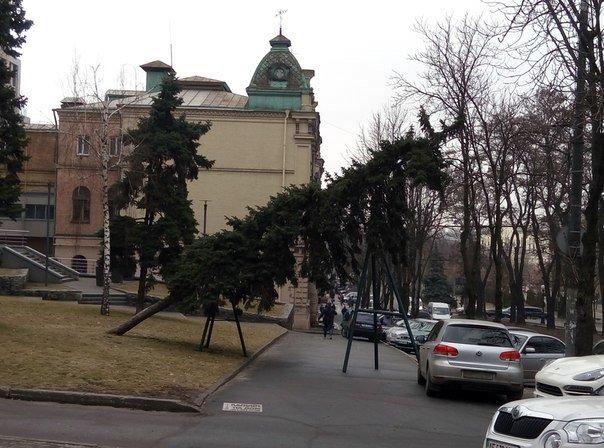 На центральном проспекте Днепропетровска дерево упало на проезжую часть (ФОТО) (фото) - фото 1