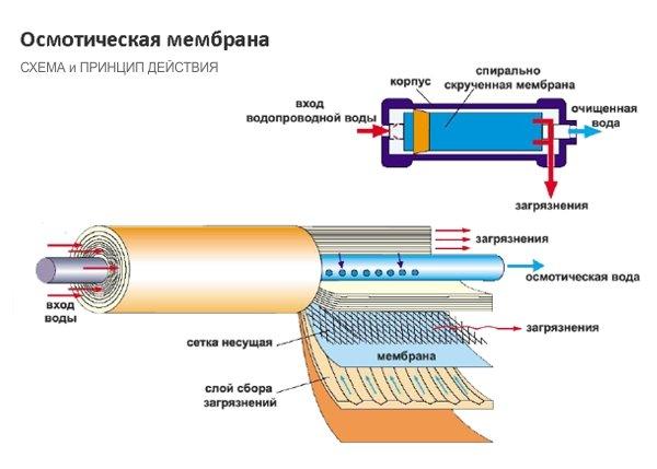 membrana-sxema