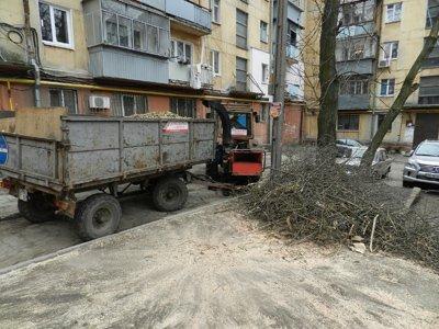 В Днепропетровске наконец спилили аварийные деревья (ФОТО) (фото) - фото 1