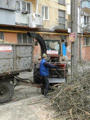 В Днепропетровске наконец спилили аварийные деревья (ФОТО) (фото) - фото 2