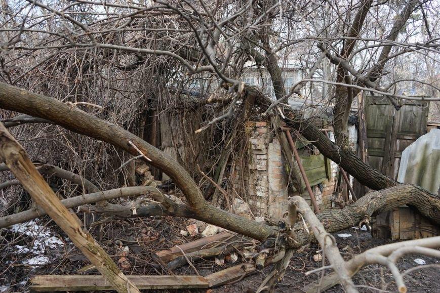 В Полтаве волонтеры и спасатели освободили беспризорных собак из двухметровой ямы (фото) - фото 3