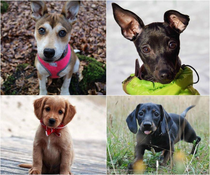 Самые умилительные щенки (фото) - фото 1