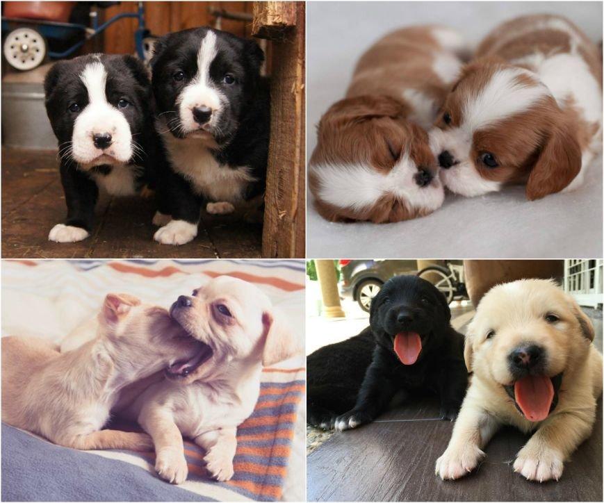 Самые умилительные щенки (фото) - фото 4