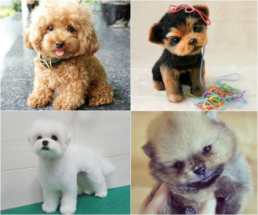 Самые умилительные щенки (фото) - фото 6