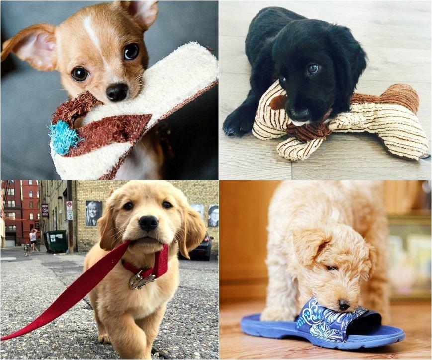 Самые умилительные щенки (фото) - фото 5