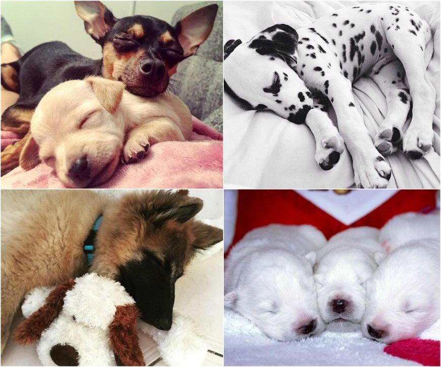 Самые умилительные щенки (фото) - фото 3