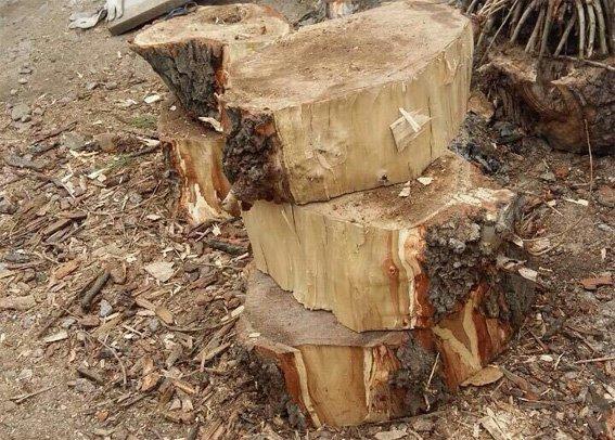 Працівники поліції викрили кіровоградця, який незаконно спиляв дерева (ФОТО) (фото) - фото 1