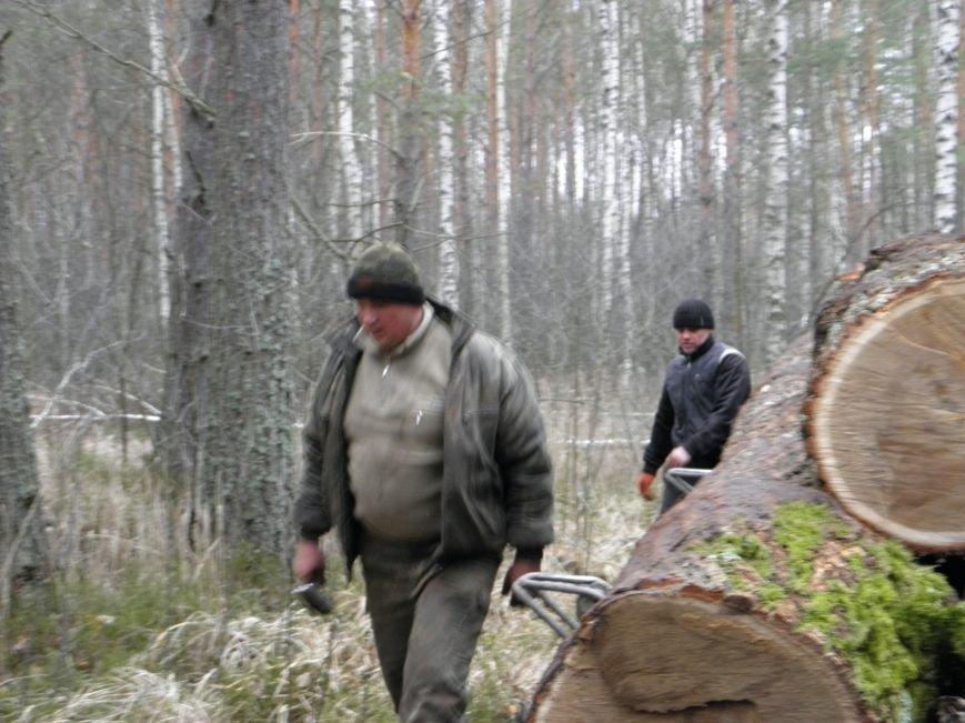 На Житомирщині побільшало лісокрадів: лісівники копають рови, аби не вирізали всі дерева (фото) - фото 1
