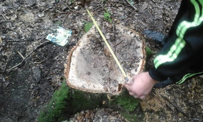 Керівника одного з лісгоспів на Львівщині покарають за незаконну вирубку лісу (ФОТО) (фото) - фото 1