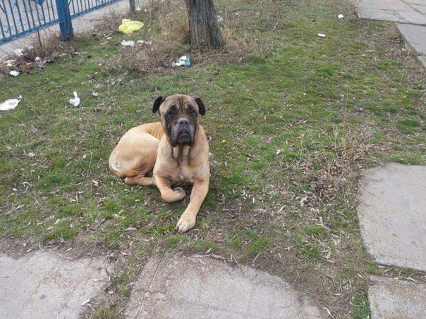 В запорожском речпорту собака скулит за погибшим хозяином, - ФОТО (фото) - фото 1