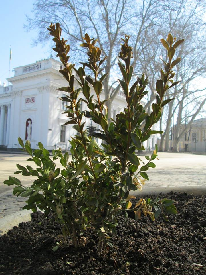 499c522f535edde9f9d249ad828a2410 Фоторепортаж: Как в Одессе началась весна
