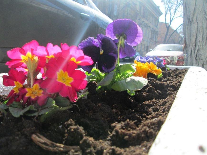 5fe9d0127ebc17d4a792fcc09e36f87b Фоторепортаж: Как в Одессе началась весна