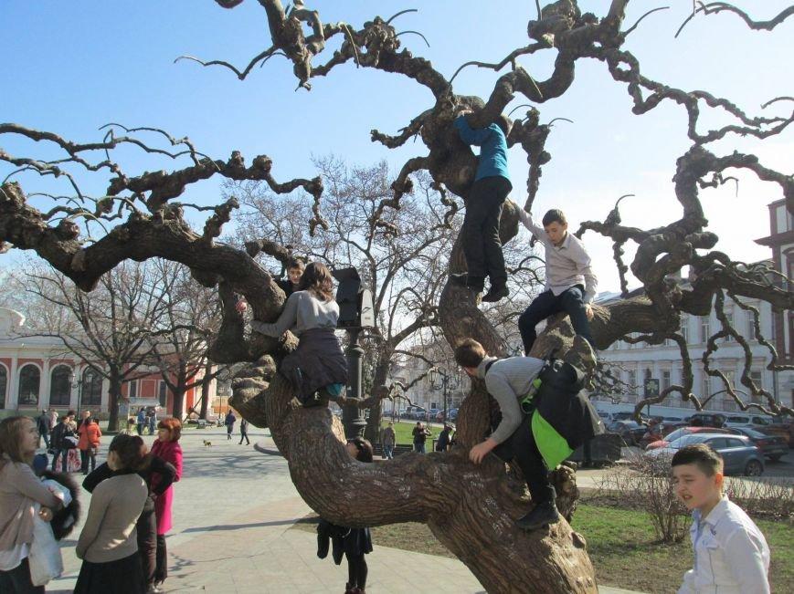 Фоторепортаж: Как в Одессе началась весна (ФОТО) (фото) - фото 1