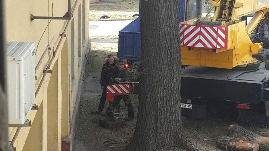 В Днепропетровске активно спиливают засохшие деревья (ФОТОФАКТ) (фото) - фото 1