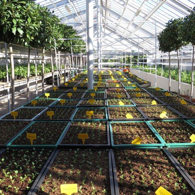 Более 100 тысяч штук цветочной рассады выращивают к лету в музее