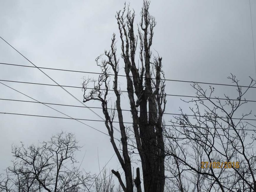 20f68e813374e672f1ac098cf99608b8 В Одессе огромный засохший тополь рискует свалиться на детский сад