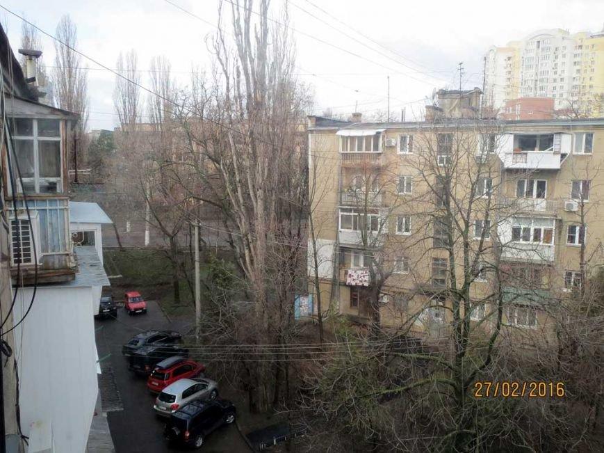 В Одессе огромный засохший тополь рискует свалиться на детский сад (ФОТО) (фото) - фото 1
