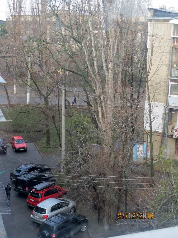 8e7699bb7b536f6ead26689b24ed9147 В Одессе огромный засохший тополь рискует свалиться на детский сад