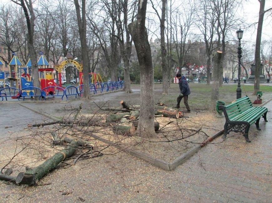24e1bc4943d13d43b7038011ee871281 В Одессе на Соборной площади пилят деревья