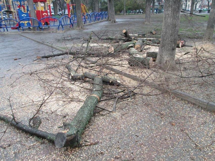 2f4da106ae8bdeb0b924e518a9eea929 В Одессе на Соборной площади пилят деревья