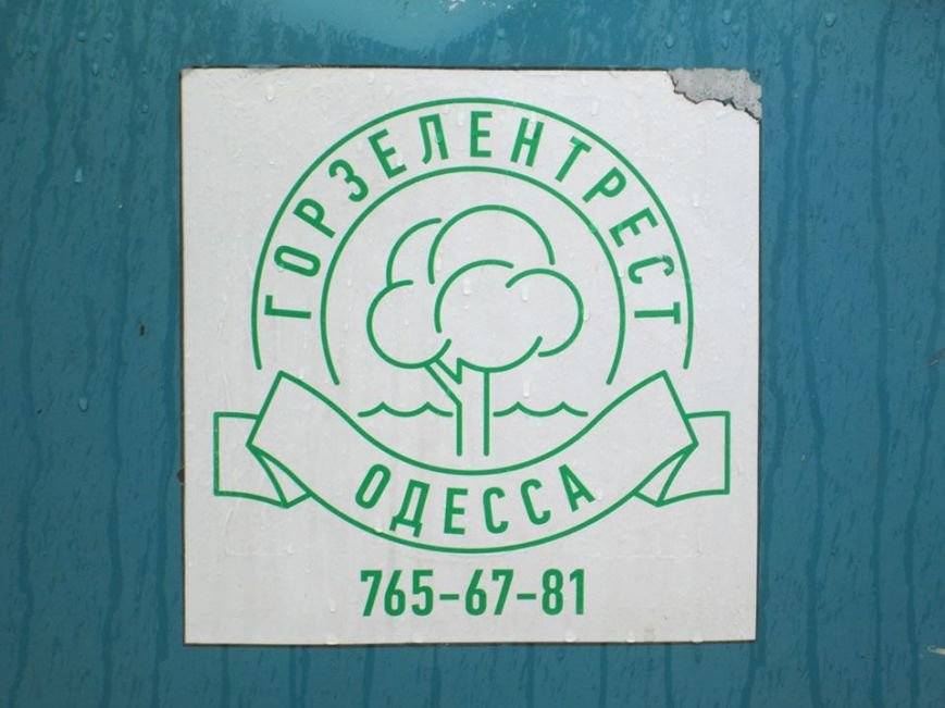 2ff5bfa9f956ff60e4a39ca39832561c В Одессе на Соборной площади пилят деревья