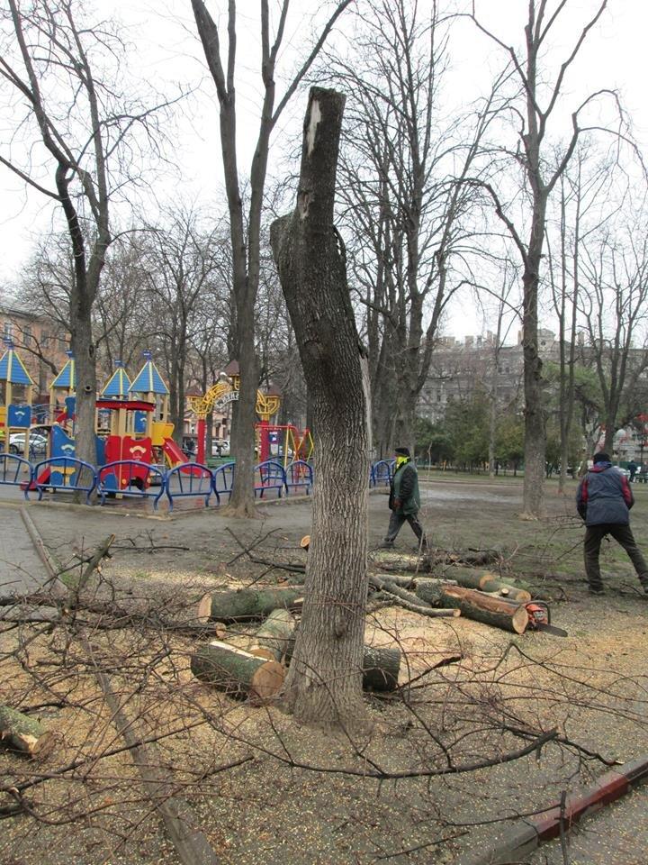 71ab69292d80d7aa1abb5278adeb77c4 В Одессе на Соборной площади пилят деревья