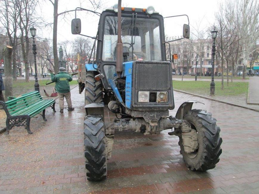 83149f9149fd5495ea2c015259bc9a74 В Одессе на Соборной площади пилят деревья