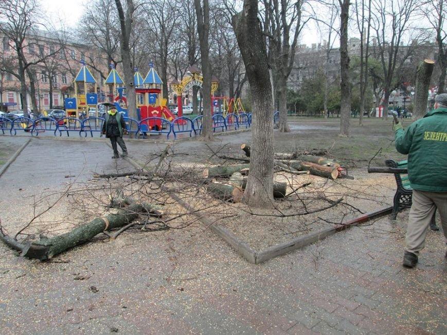da012555922b77c539c877401bebfff2 В Одессе на Соборной площади пилят деревья