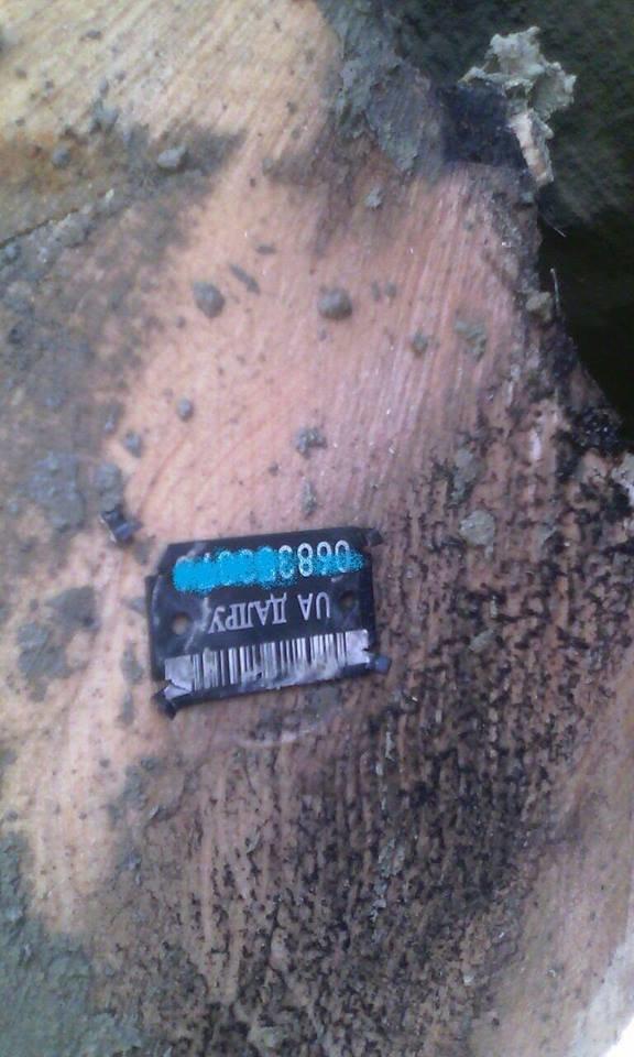 Патрульні в Ужгороді попередили незаконне перевезення деревини (фото) - фото 1