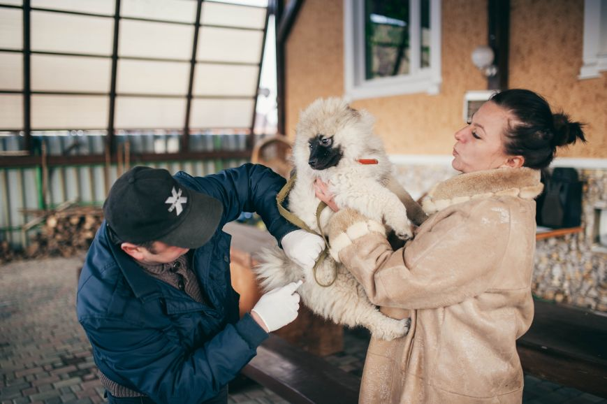 Професія «Ужгородець». Ветеринар Женя Рєпкін (фото) - фото 2