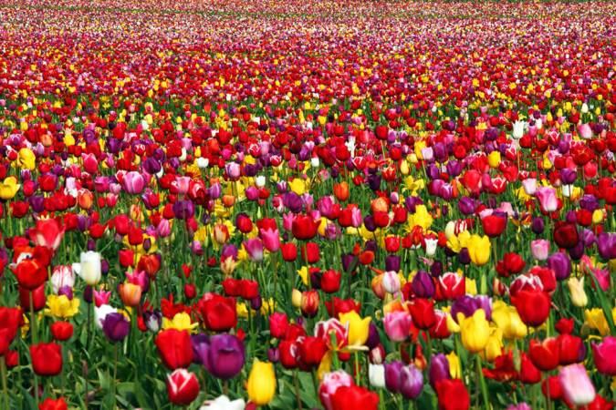 выставка время тюльпанов