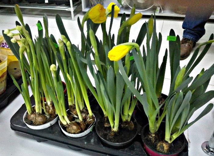 Покупаем цветы к 8 марта. Сколько стоят розы и тюльпаны в Новополоцке и Полоцке, фото-2