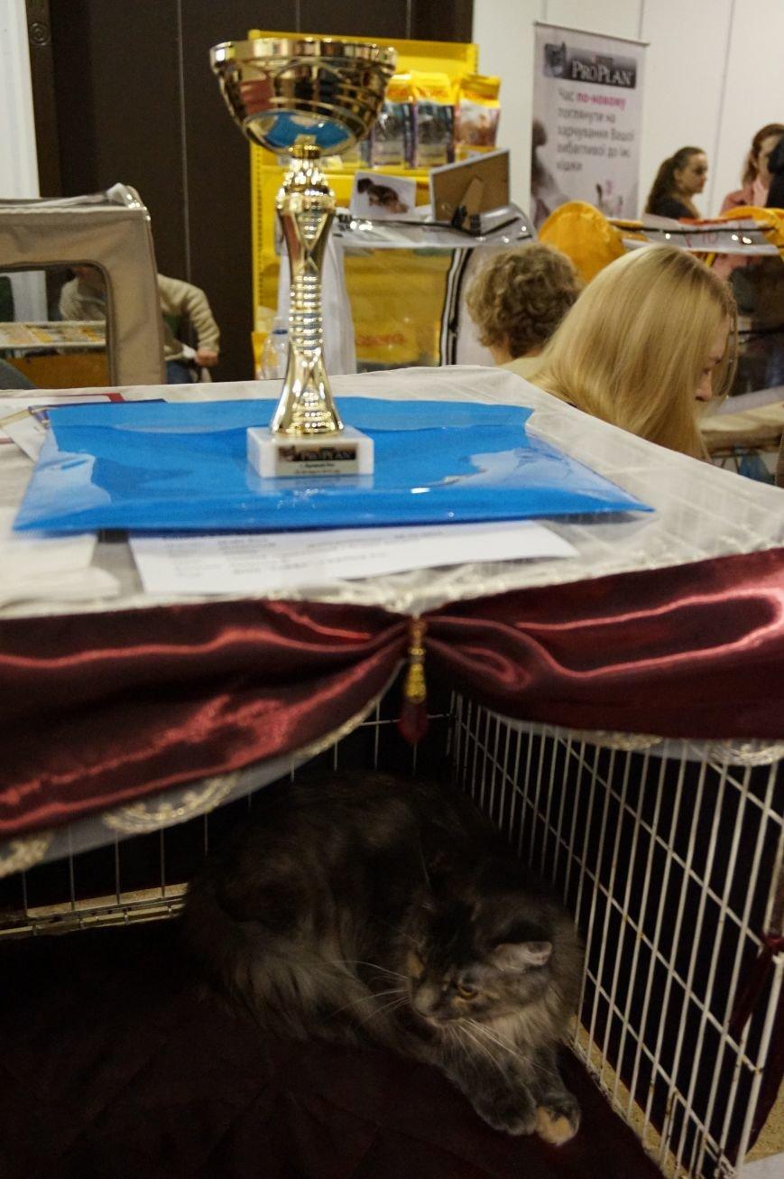 Кошки (фото) - фото 1