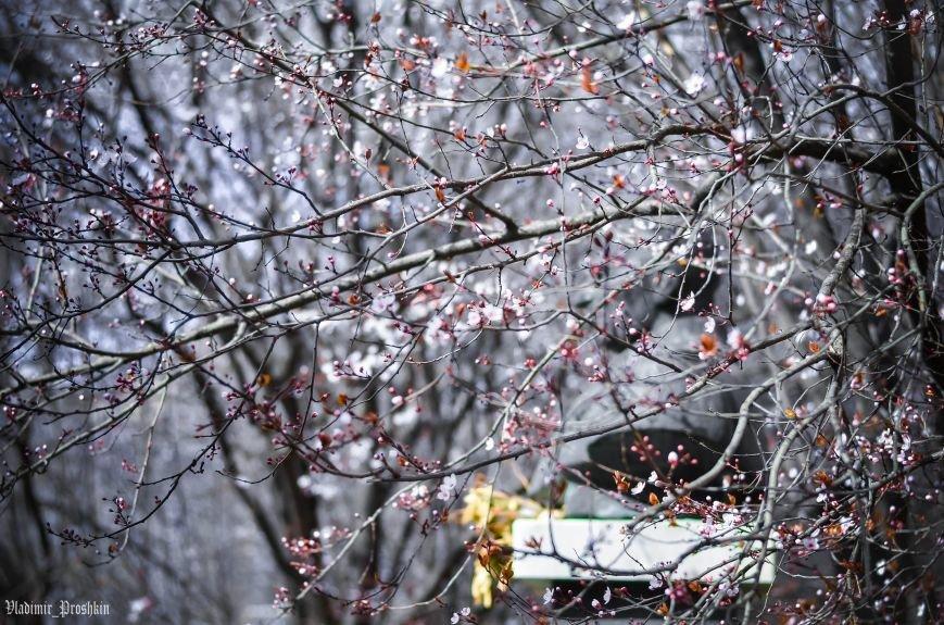 Мартовское настроение в Симферополе (ФОТО), фото-3