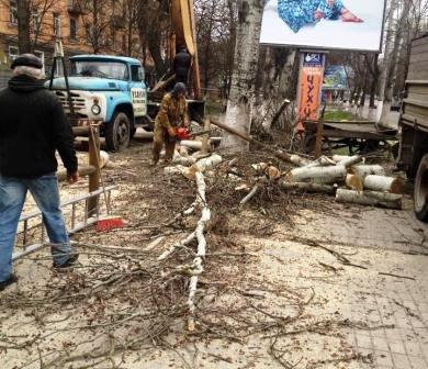 В Херсоне деревья уничтожают под присмотром эколога (фото) - фото 1